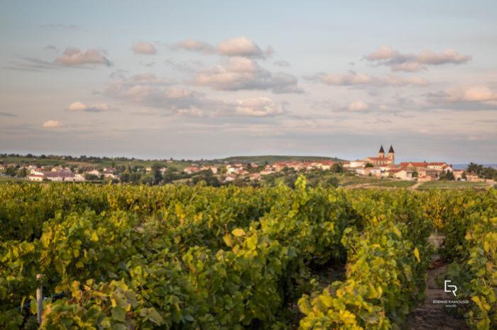Vins & Crus du Beaujolais 2019 - vignes à Régnié